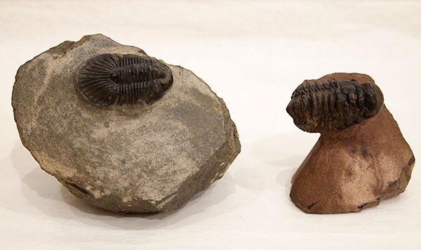 trilobites1